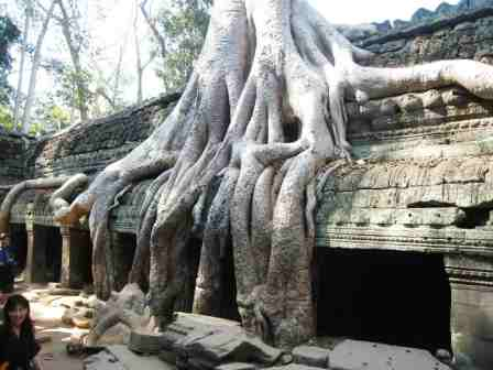 Temple Ta Prohm